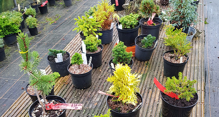 We offer plants not previously offered for sale anywhere.