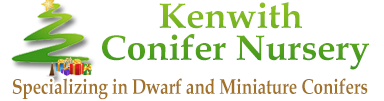 Kenwith Conifer Nursery